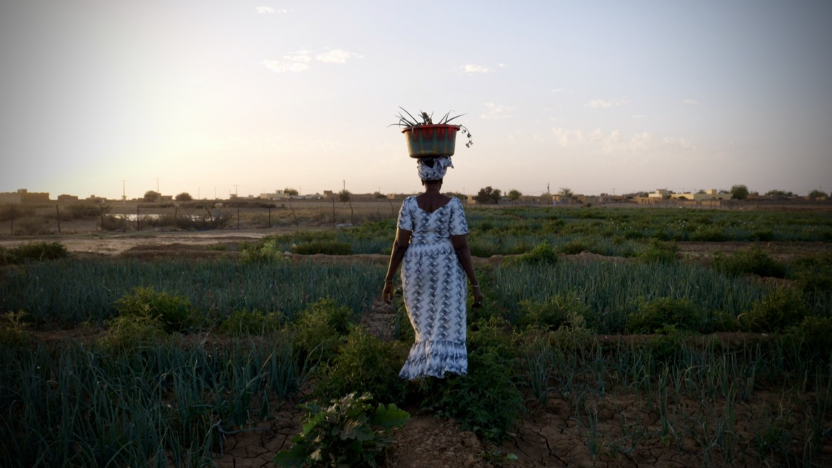 A picture of a dusk scene in Africa. The photo is of a field, with an African woman in a white full-length dress in the middle of the photo. She has her back to the camera, and carries a basket on her head.